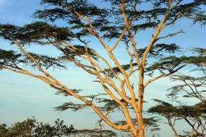 Beste Reisezeit Kenia