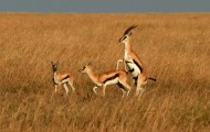 Beste Reisezeit Tansania