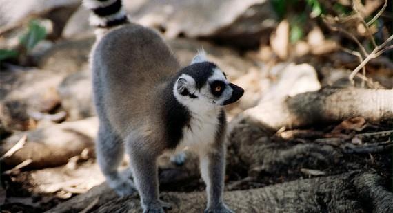 Beste Reisezeit Madagaskar